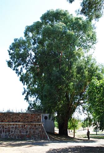 La Higuera, antiguo manantial y lavadero; actual depósito y merendero.